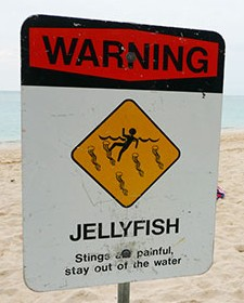 Sign - Jellyfish