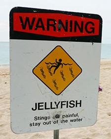 Sign - Jellyfish